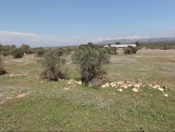 Els terrenys on s'havien de fer els hivernacles per plantar marihuana J.C.L.