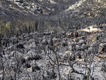 Vegetació calcinada pel foc que crema des de dimarts a la nit a Mallorca EFE