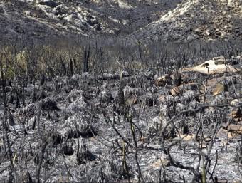 Vegetació calcinada per l'incendi que va començar el dimarts a Cala Torta, a Mallorca EFE