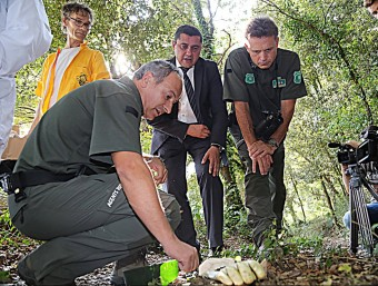 El delegat d'Agricultura i els apicultors observant un agent Rural com obre una de les trampes, ahir a Sant Privat. MANEL LLADÓ