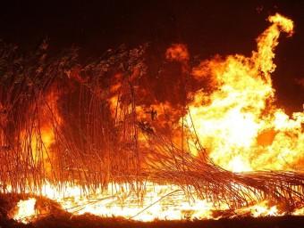Les violentes flames cremen una zona de conreus al terme municipal de Jafre i que avançaven pel fort vent JORDI RIBOT / ICONNA