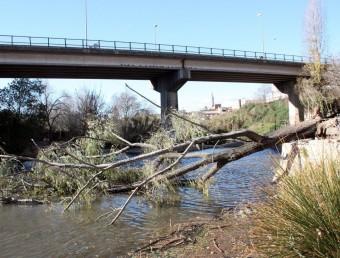 El vent ha tombat dos immensos arbres al parc de Mas Miquel, a Valls ACN