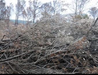 Alzines i pins tallat s en la zona afectada pel foc a Colomers. EL PUNT AVUI