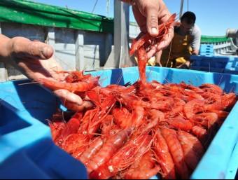 El peix fresc i les gambes de Vilanova són un dels productes que Llepadits.com distribueix online.  L'ECONÒMIC