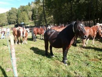 Els cavalls són una de les espècies que les entitats diuen que estan amenaçades. C