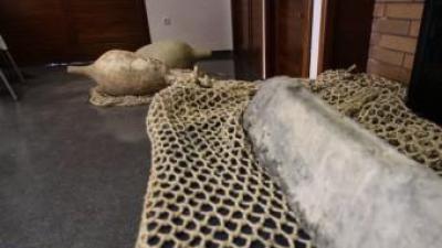 Algunes de les troballes fetes al jaciment subaquàtic. EL PUNT AVUI
