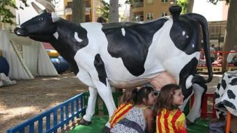 Una de les vaques per aprendre a munyir J. SABATER