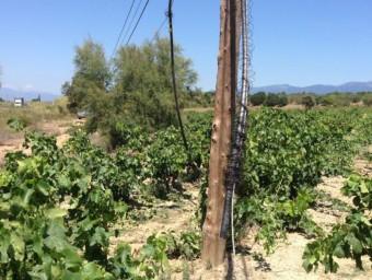 Un tram de la línia de telèfon en què han actuat els lladres. Connecta la centraleta de Vilajuïga amb Garriguella. Pels furts, Vilamaniscle va quedar afectada de retruc EL PUNT AVUI