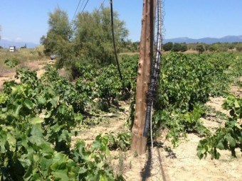 Un tram de la línia de telèfon de Garriguella on han actuat els lladres EL PUNT AVUI