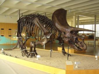 El triceratops que es va desmuntar i ara torna a Sabadell ICP