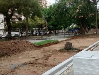 Soca d'un arbre tallat a la zona del Jardinet de Gandia. EL PUNT AVUI