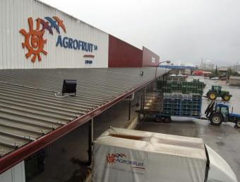 La pluja d'ahir va provocar que no es descarreguessin camions de mandarines a Agrofruit. EFE/ SOFIA CABANES