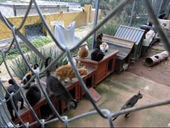 Habitacle de gats a la protectora de Gandia. EL PUNT AVUI