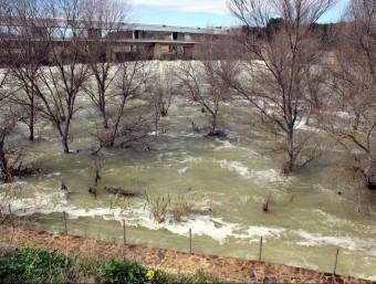 Arbres inundats sota la presa de l'embassament de Flix. LAIA POBLADO/ACN
