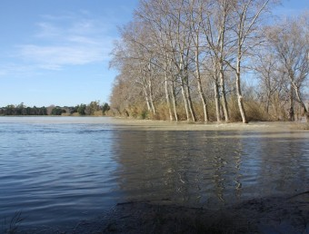 Una terreny agrícola de la zona del Camí del Mig de Tortosa, inundada amb un metre d'aigua ACN