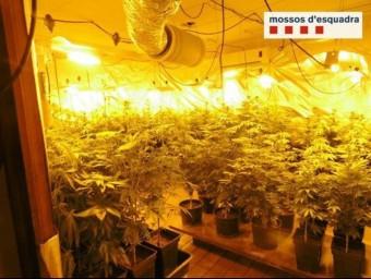 El cultiu estava repartit en dues plantes d'un antic hotel, que va ser escorcollat el dia 3 CME