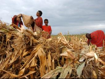 Pagesos de Kenia a un camp de blat de moro.  ARXIU