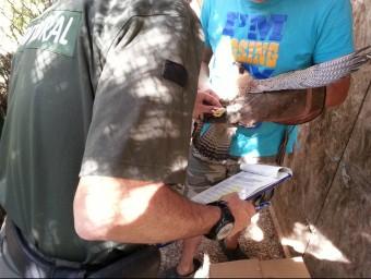 Un Agent Rural comprova la documentació d'un falcó