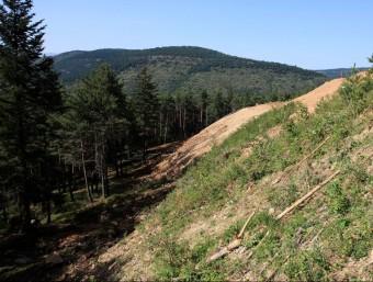 Un detall de la zona objecte del litigi que ha enfrontat la plataforma Salvem la Molina amb les administracions. EL PUNT AVUI
