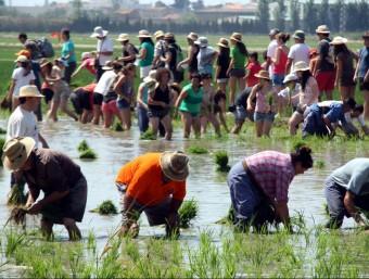Quatre plantadors professionals amb el públic participant entrant a l'arrossar en la plantada tradicional de Deltbre