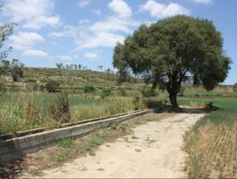 Imatge d'una pista forestal al terme municipal de Garrigoles a tocar de Jafre, zona on aquest matí s'ha trobat el cadàver del motorista ACN