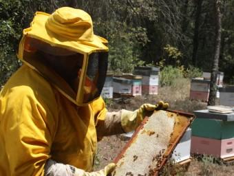 Un apicultor mostra ahir els efectes de la calor sobre les abelles i un camp d'ametllers de la zona de les Garrigues que han patit els efectes de la calor extrema ACN / E. POMARES