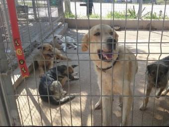 El centre de Torredembarra disposa de condicions més adequades pels animals CEDIDA