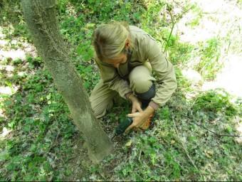 Un operari fent el tractament d'eliminació d'espècies d'arbres invasors EL PUNT AVUI