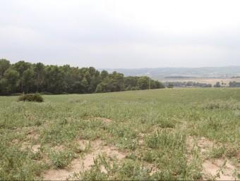 Els terrenys del sud de Caldes de Montbui on es preveu el pas del quart cinturó GRISELDA ESCRIGAS