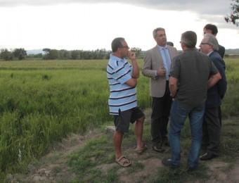 Pericay i Ciuraneta –els dos primers per l'esquerra– ahir a la tarda durant la visita a l'arrossar on s'ha detectat el cargol poma al Baix Ter E.A