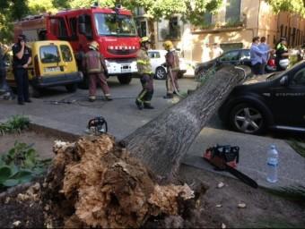 Un arbre va caure ahir pels volts de les cinc de la tarda a la plaça Sant Pere de Girona i va provocar danys en tres vehicles. G. P