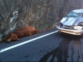 L'accident d'un cotxe que va xocar amb una vaca aquest passat dilluns ha motivat que la sots-prefectura de Ceret ordenés el sacrifici de 20 animals RADIO FRANCE ROUSSILLON