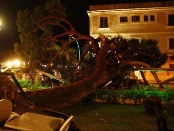 La tempesta ha provocat la caiguda d'un gran pi, aquest dijous a la nit a Salou ACN