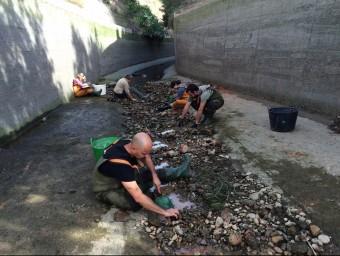 Tècnics i voluntaris del parc natural participen en el rescat de peixos. EL PUNT AVUI