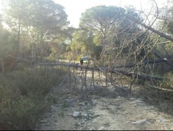 Els ADF van enretirar arbres caiguts a les Gavarres, al Baix Empordà ADF GAVARRES MARÍTIMA