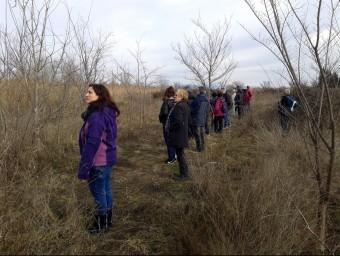 Un grup de voluntaris en fila a punt per pentinar un camp durant una batuda que es va fer a Almacelles a principis de gener per buscar Joan Altisent ACN