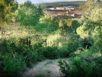 Els terrenys del puig d'en Font, a Pedrinyà, on estava previst aixecar 85 xalets MANEL LLADÓ