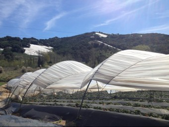 Els hivernacles a l'entrada de Sant Cebrià de Vallalta tenen per aquesta temporada poca producció. E.F