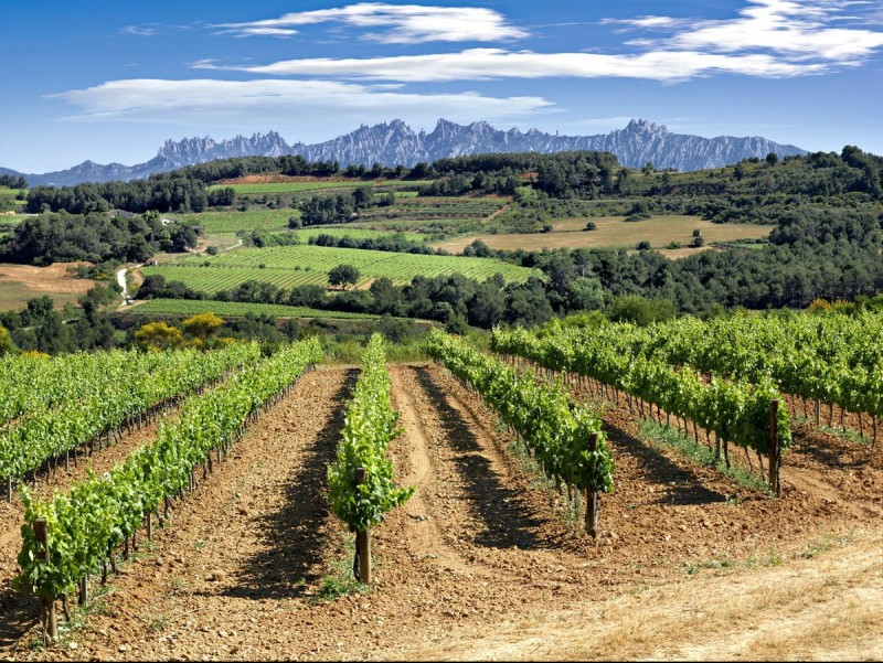 Grape-growing and wine-making form the backdrop for the story of Josep Alvarez./  ENOTURISME PENEDÈS