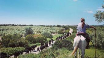 Juan Martorell, d'esquenes, vigila el ramat mentre aquest travessa la comarca del Montsià en direcció al País Valencià. CEDIDA