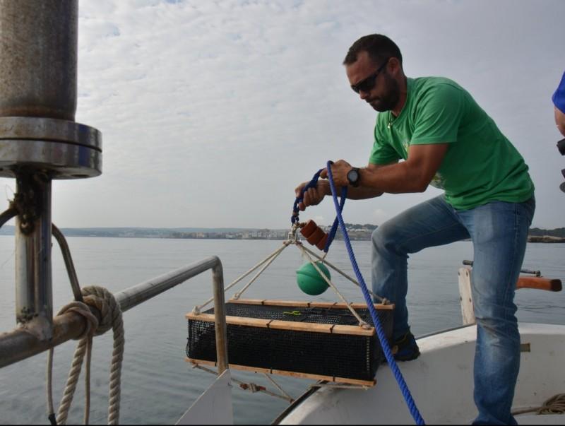 La col·locació de les gàbies al mar EL PUNT AVUI