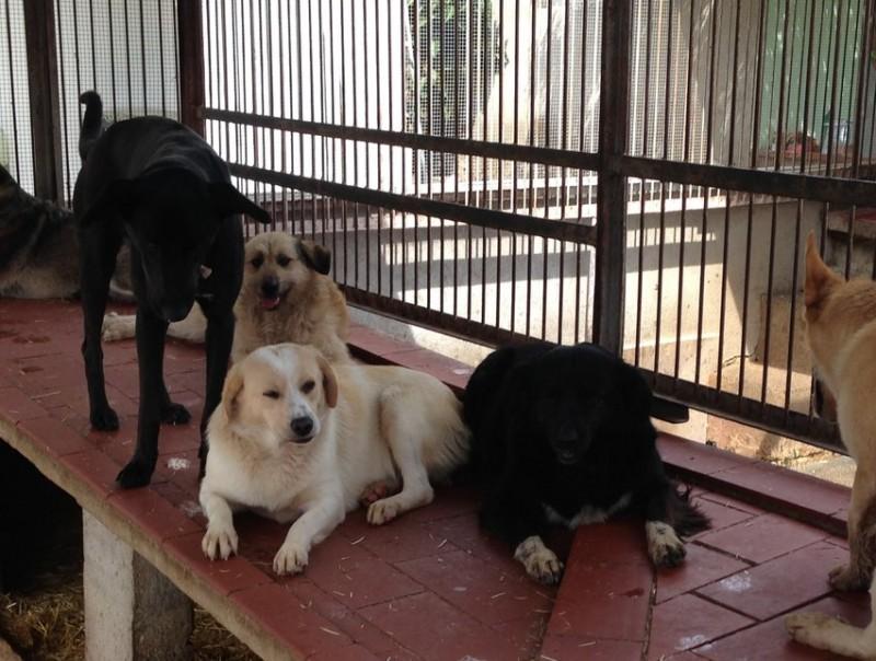 Gossos recollits a la protectora de Figueres en una imatge d'arxiu JOAN SABATER