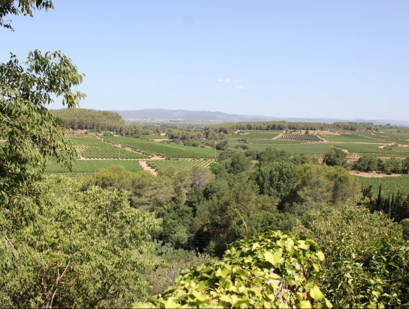 Vista d'unes vinyes al Baix Penedès. TAEMPUS / C. MORELL