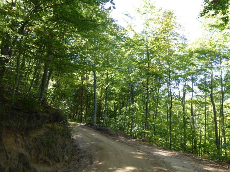 Bosc de la zona de Vallclara, en una foto extreta d'Internet. Arxiu