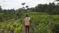 Ana Clemencia Guanga fumiga el seu cultiu de coca al municipi colombià deTumaco