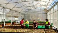 El projecte d'horticultura que La Fageda du a terme als hivernacles que té a la seu de la cooperativa