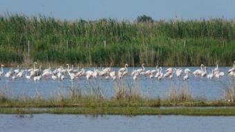 Imatge del delta de l'Ebre