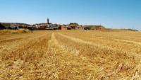 El blat és un maldecap per a moltes al·lèrgies i per a la malaltia celíaca