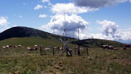 Torres que analitzen l'impacte del canvi climàtic amb un ramat de vaques