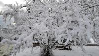 Un arbre nevat a Santa Pau el 2018